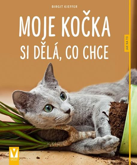 Velká chlupatá latina kočička