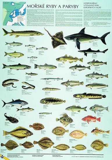 Ryby připojit web