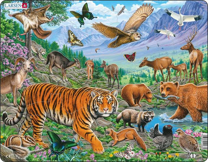 PUZZLE MAXI - Amurský tygr v sibiřském létě/36 dílků