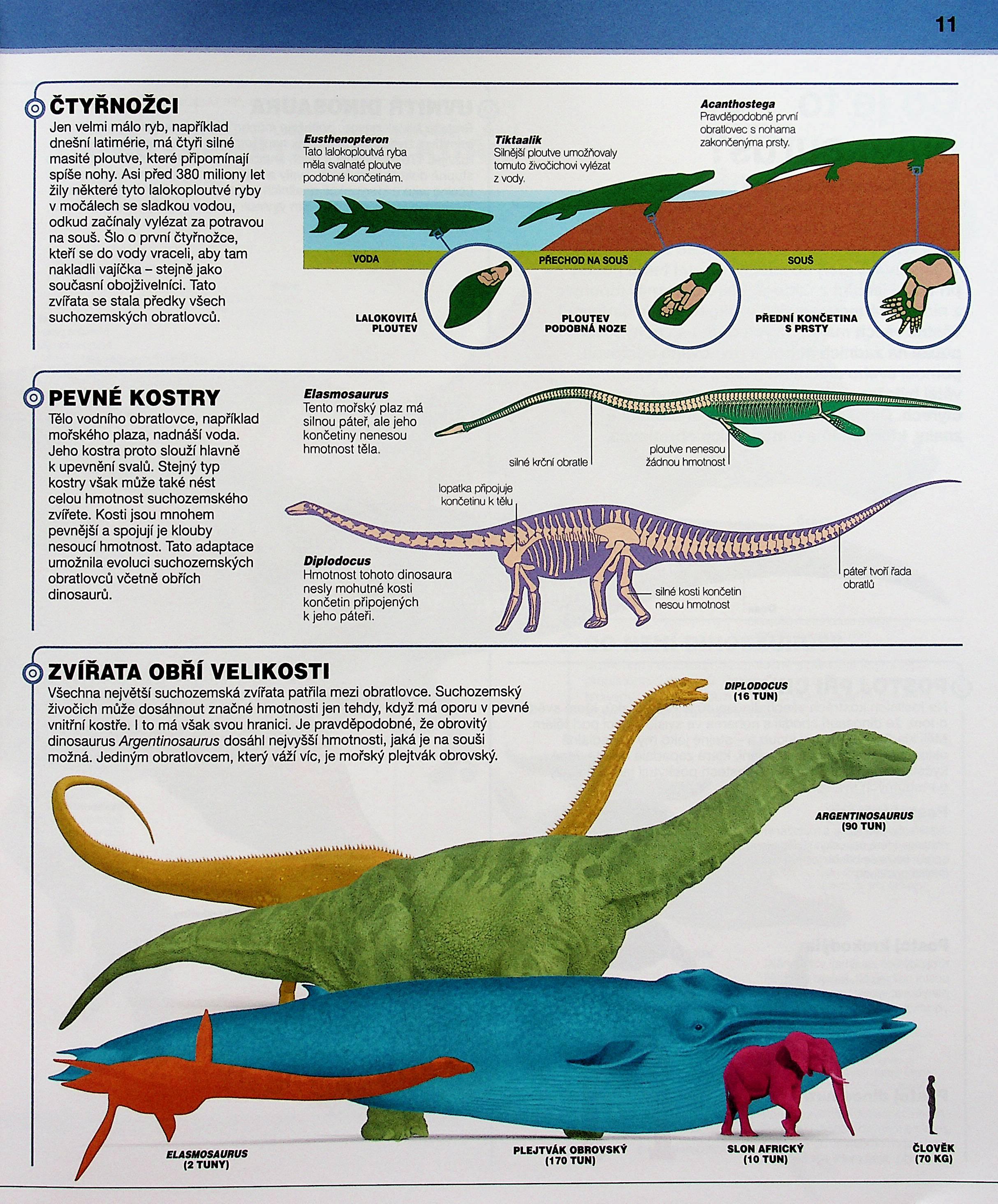 Datování kostí dinosaurů