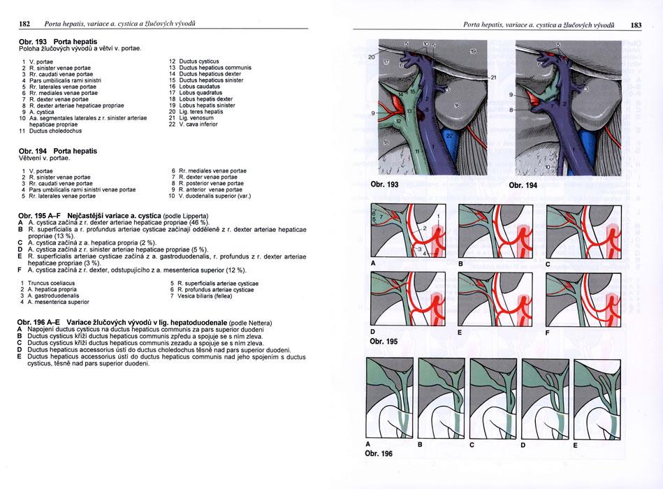Ausgezeichnet Itec Anatomie Und Physiologie Fotos - Anatomie Ideen ...