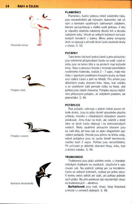 obrázky mužů s velkými ptáky
